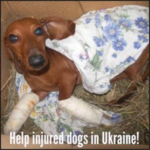 20150228_Padėkime-nuo-karo-Ukrainoje-nukentėjusiems-šunims_foto2-300x300