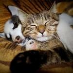 katinas_suo-150x150
