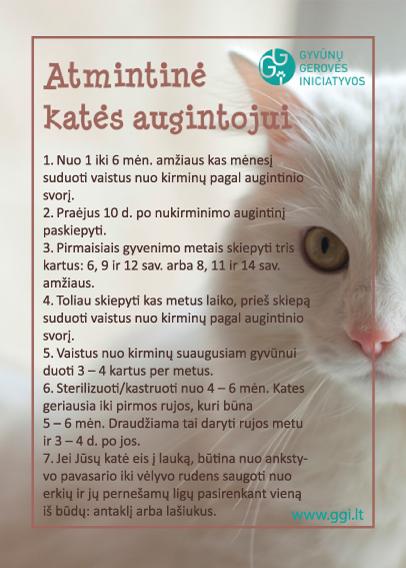 cat_atmintine