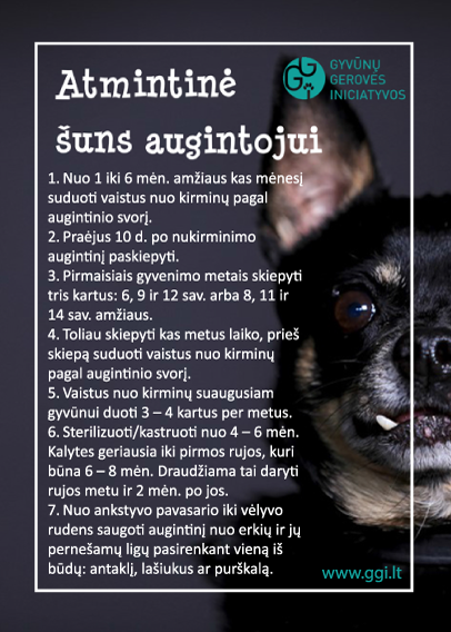 dog_atmintine