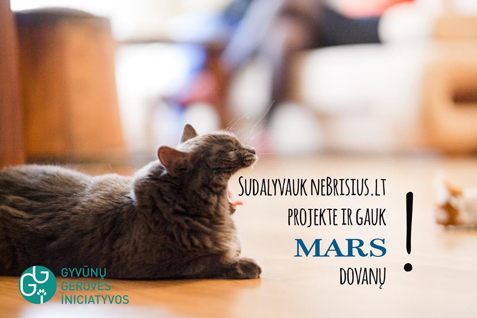 dalyvauk-projekte-ir-gauk-mars-dovanu