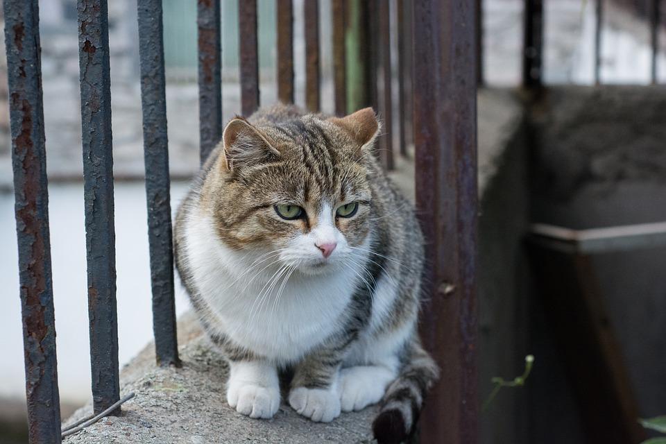 cat-1286357_960_720