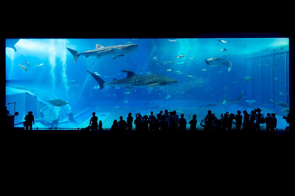 aquarium-725798_960_720