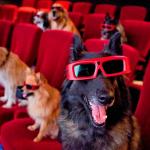 dogplace film1
