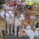 4 Sukišti į maišus ir paruošti virti Vietnamo turguje bejėgiai naminiai gyvūnai