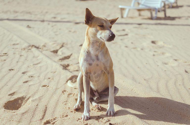 adorable-animal-beach-894304-768x508
