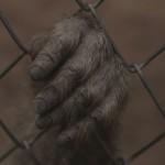 cage monkey