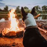 campingwithanimals