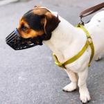 leash gyvunu laikymo taisykles cover